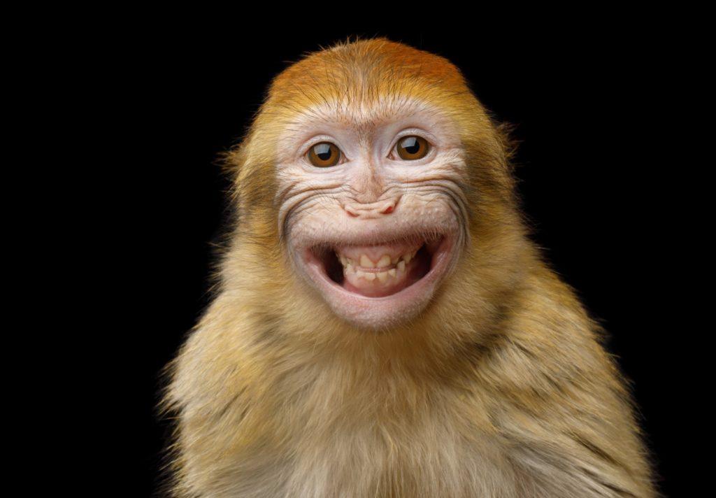 petit singe sur fond noir qui sourit de toutes ses dents