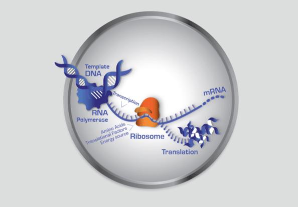 illustration scientifique
